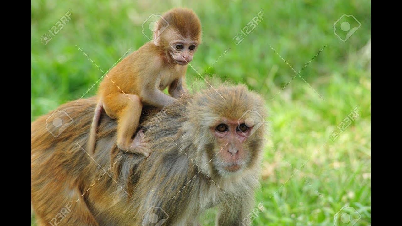 【可愛動物】猴子寶寶與猴子媽媽互動的有趣畫面 - YouTube