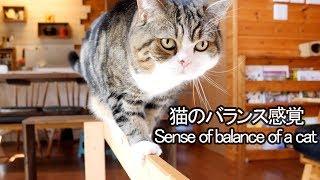 平均台とねこ。Balance beam and Maru&Hana.
