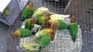 GALIFF STREET BIRD MARKET KOLKATA, INDIA || NEW HD VIDEO 2016