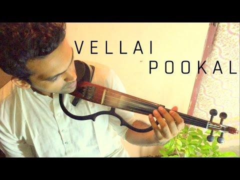 Vellai Pookal - A.R. Rahman | STRINGS Cover - Keethan, Manoj, Ábel, Caroline