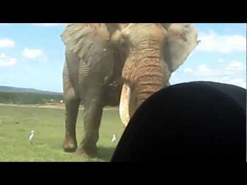 World's Biggest Elephant