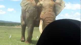 World's Biggest Elephant