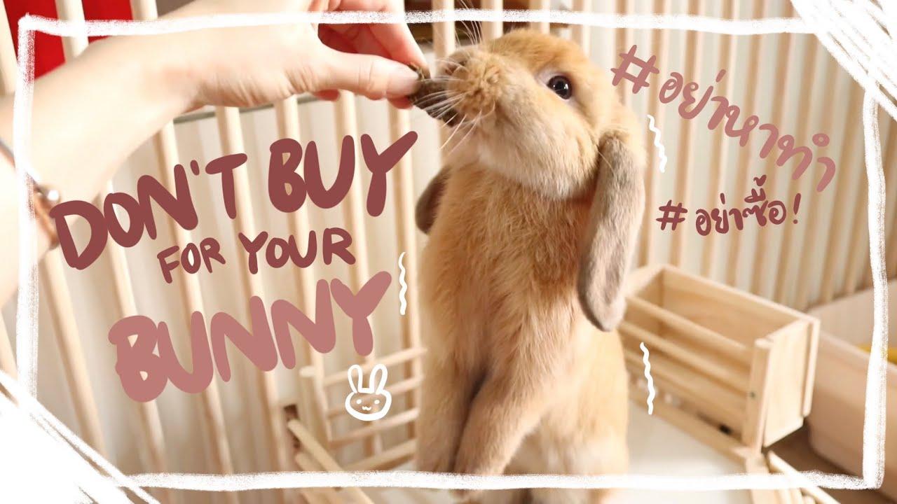 Download Ep.5 สิ่งที่ไม่ควรซื้อให้กระต่าย ถ้าไม่อยากเสียดายทีหลัง #BunnyTTCoupe | Joyjee Loveberry