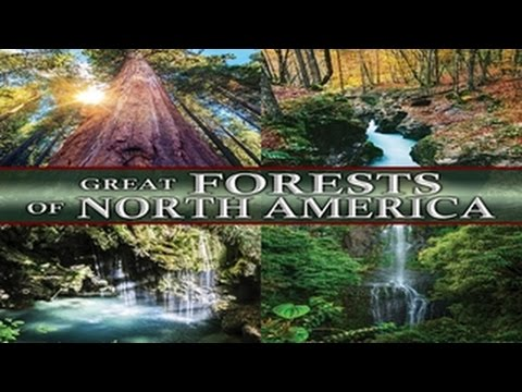 Great Forests of North America! – Journey into Nature, no Cell Phones, No Texts! – WATCH AND RELAX!