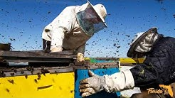 Florida Bee Removal: Lakeland, FL's Trusted Bee Removal and Relocation Professionals