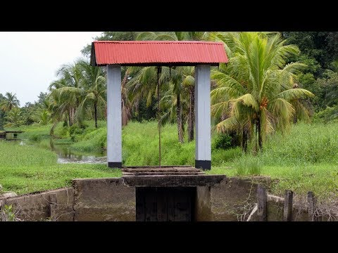 Commewijne Tour - Access Suriname Travel