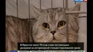 """Единственная в Иркутской области ветстанция с собственным банком крови - в Иркутске, """"Вести-Иркутск"""""""