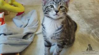 Gaia's Kittens - Happy Fosters