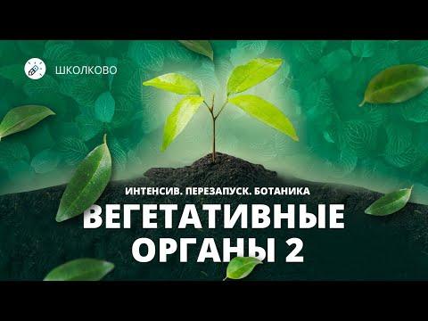 Биология. ЕГЭ2021. Вегетативные органы 2