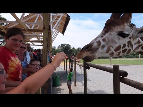 Lake Tobias Wildlife Park - Safari & Giraffes -July 2019