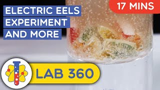Electric Eels | Amazing Science Experiments You Can Do At Home | Lab 360