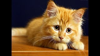 Лучшие приколы про котиков | Подборка самых смешных кошек и котят