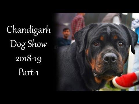 Chandigarh Dog Show 2018-19 Part 01