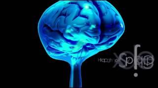 Neuroanatomie: Le Liquide Céphalo-Rachidien LCR