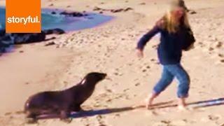 Sea Lion Chases Woman Around Beach (Storyful, Wild Animals)