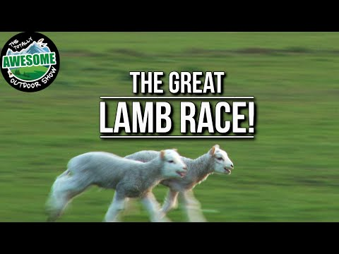 Awesome Lamb Race!! | TAOutdoors