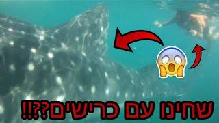 שחינו עם כרישים בים!!!!? וולוג פיליפינים!