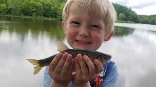 10 Species Fishing Challenge - Shiners, Bass, Catfish, Carp, Bluegill, Snakehead, Sunfish & More