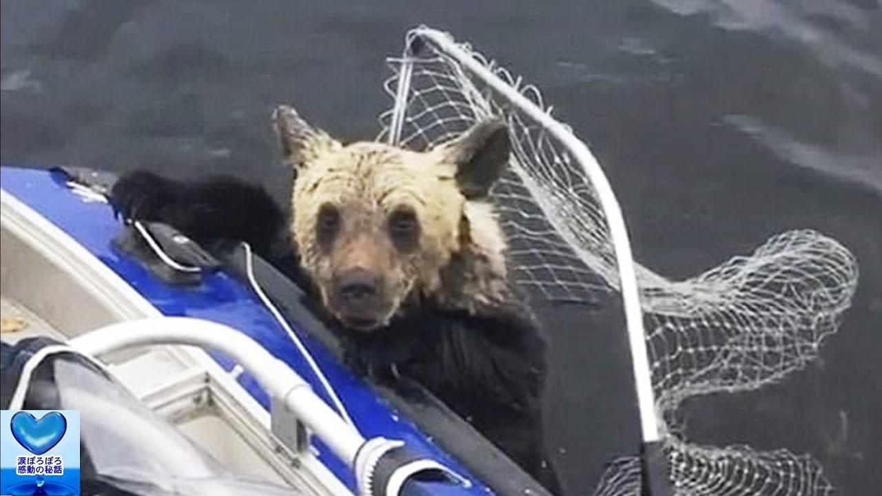 冷たく凍る湖ではぐれてしまった子熊を救えなかった母熊。目撃した漁師たちは驚くべき行動に出ました【感動】