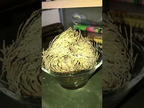 The Rose of Jericho and Our Prosperity Maintenance