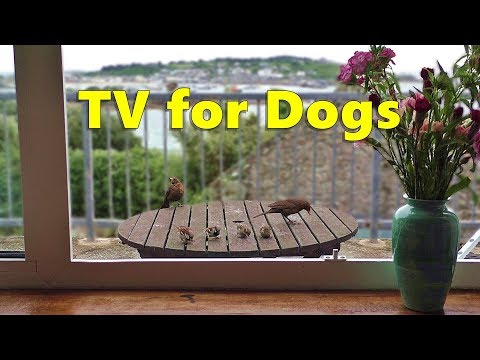 Dog Watch TV : Relaxing Videos for Dogs - Birds Through The Window - 8 HOURS