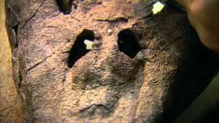 История животного мира 'Из морей в небеса'