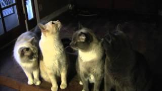Cat Criminals - Furball Fables