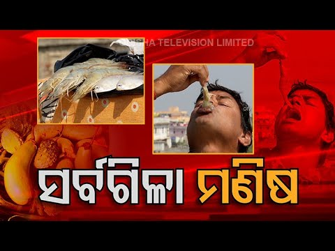 Odisha Man Who Can Eat Everything Raw - OTV Discussion@8