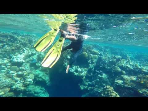 Mesoamerican Barrier Reef, Roatan, Honduras Snorkeling 2017