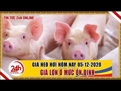 Giá heo hơi ngày hôm nay 5/12/2020 Giá heo hơi biến động thế nào ? cập nhật giá lợn hơi mới nhất