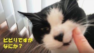 ビビリ猫と3泊4日でここまで仲良くなれる【妹滞在4日目】