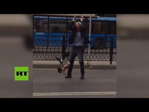 Una pata ataca a un taxista para defender a sus crías