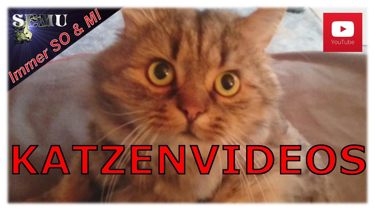 Katzenvidios