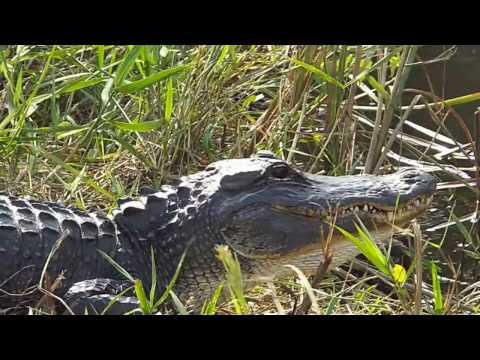 Perpetual Odyssey: A drive through the Everglades!