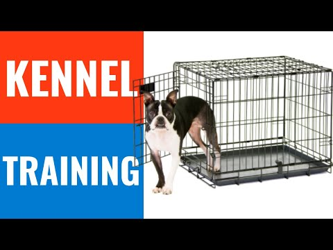 Crate train a puppy or a dog | How to and if you should.