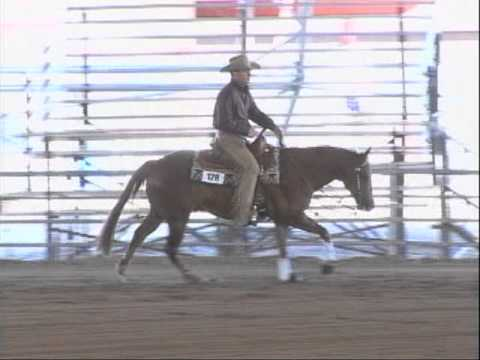 """""""Preston"""" Finished AQHA Western Pleasure Horse For Sale from YouTube · High Definition · Duration:  2 minutes 56 seconds  · 4.000+ views · uploaded on 08.07.2016 · uploaded by Chelsea Holland"""