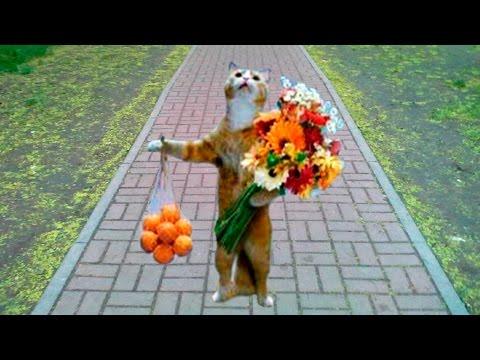 Клип Смешные моменты животных смотреть онлайн: