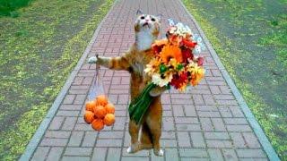 Прикольное видео с животными, милота!!!(Смешные видео про кошек очень любят смотреть и дети и взрослые... На канале много смешных видео про животных...., 2016-09-18T14:48:20.000Z)