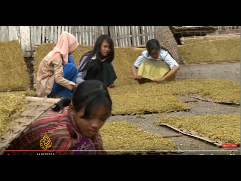 Indonesia's tobacco industry 'using child labourers'