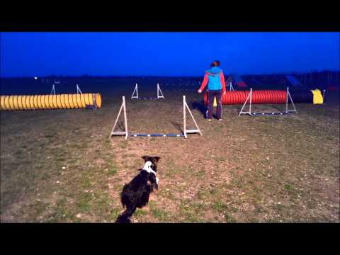Genetic IQ Electric Treat Agility 7 months