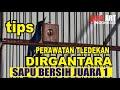 Bongkar Rawatan Tledekan Dirgantara Nyeri Juara  Piala Walikota Semarang  Mp3 - Mp4 Download