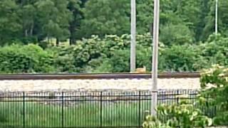 線路の上の鹿
