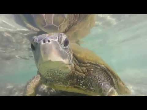 COLLEGE IN HAWAII: BIG ISLAND