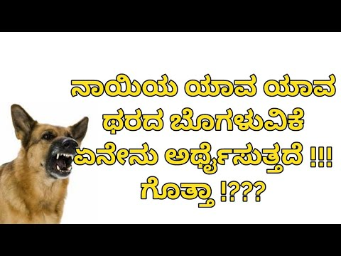 Dog barking analysis in Kannada