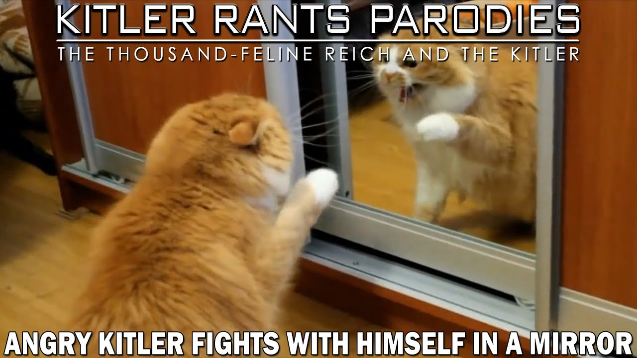 Angry Kitler fights with himself in a mirror