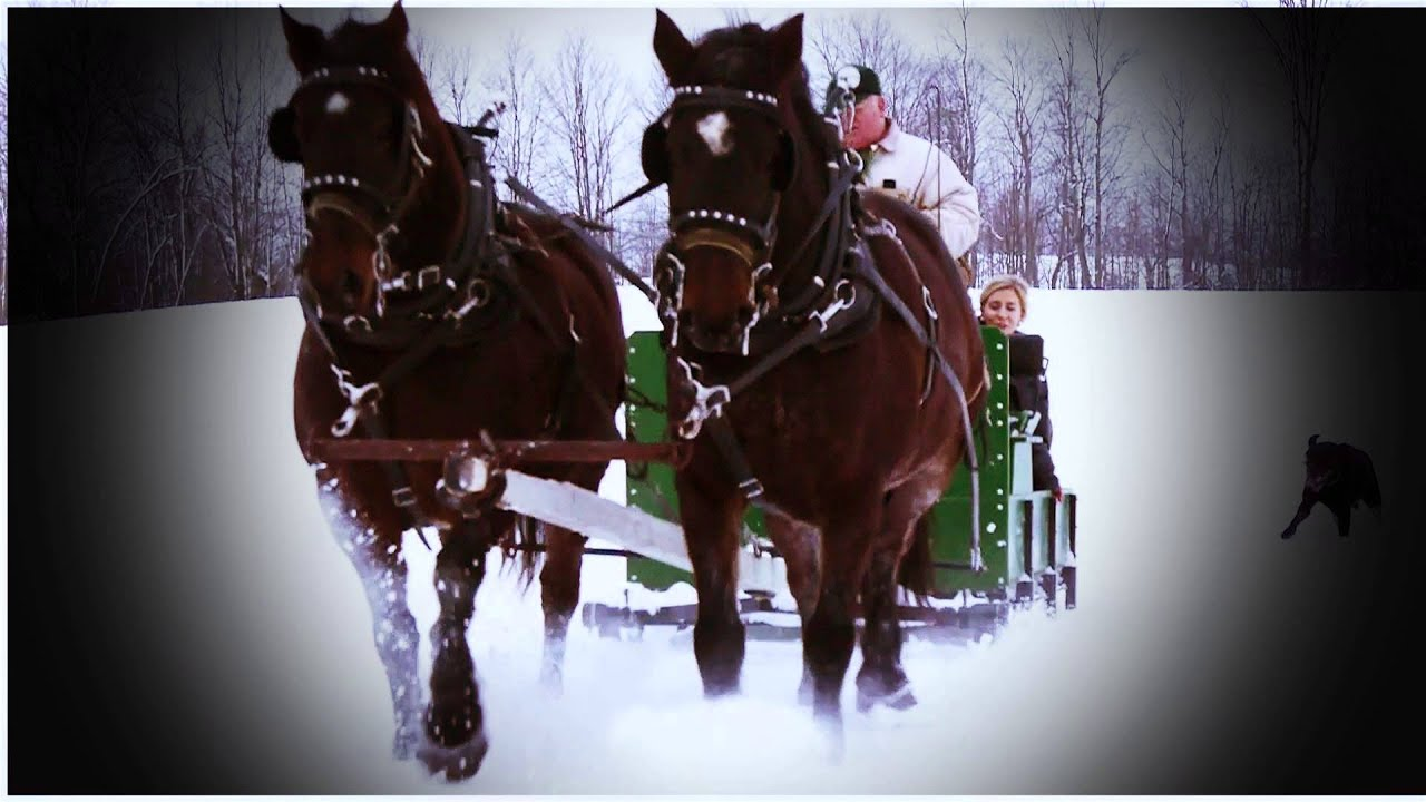 horse drawn sled images | Old-Fashioned Horse-Drawn Sleigh ... |Horse Drawn Sleigh Rides Christmas