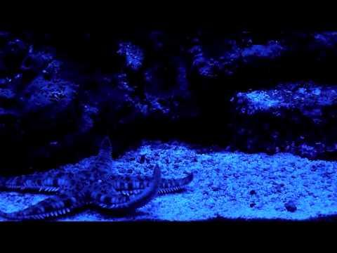 Soaring Starfish (HD)