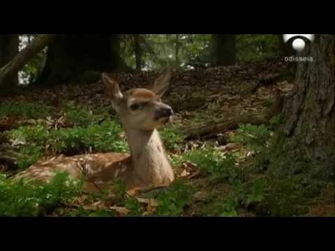 Grandes Documentales-El principe de los Alpes