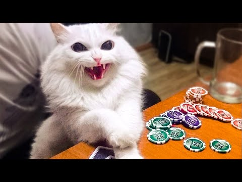 🤣 Funniest And Cute Cats 😻 Cats - Try Not To Laugh Animals - Funny Pet  Dogs And Kittens Videos 😇