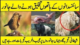 What is Transgenic Animals and Genetic Engineering in Urdu Hindi